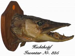 Hechtkopf-Inventar-Nr -325-300x223 in Heimatmuseum
