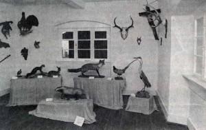 Jagdzimmer 1-300x189 in