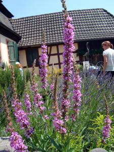 Tag-des-Schulgartens-20 06-32-600-225x300 in Kräuter AG